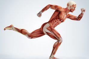 Training nach Muskelgruppen - Fitness Übungen für alle Muskeln INFOGRAFIK