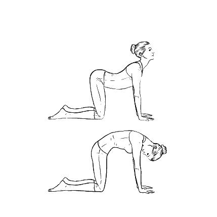 Yoga Übung: Katze Kuh Stretch - Yoga Übungen fürs Büro