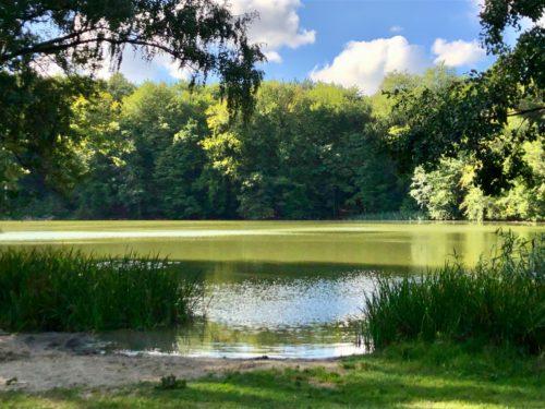 Sunnyside Fasten Fastenwandern nach Buchinger in Berlin